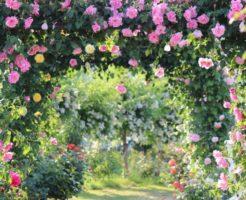 薔薇、庭、アーチ