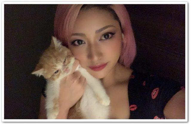 木村花,猫