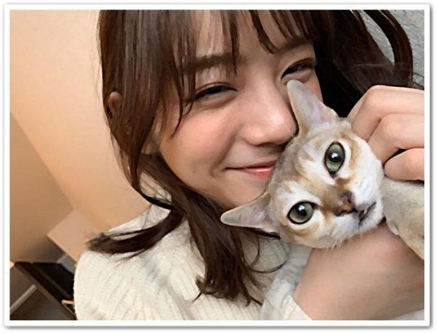 貴島明日香,猫